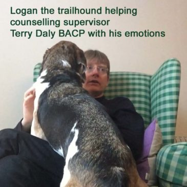 Dogs and human emotions in therapy sessions