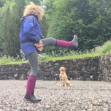 Help on Labrador Sit-stay Training