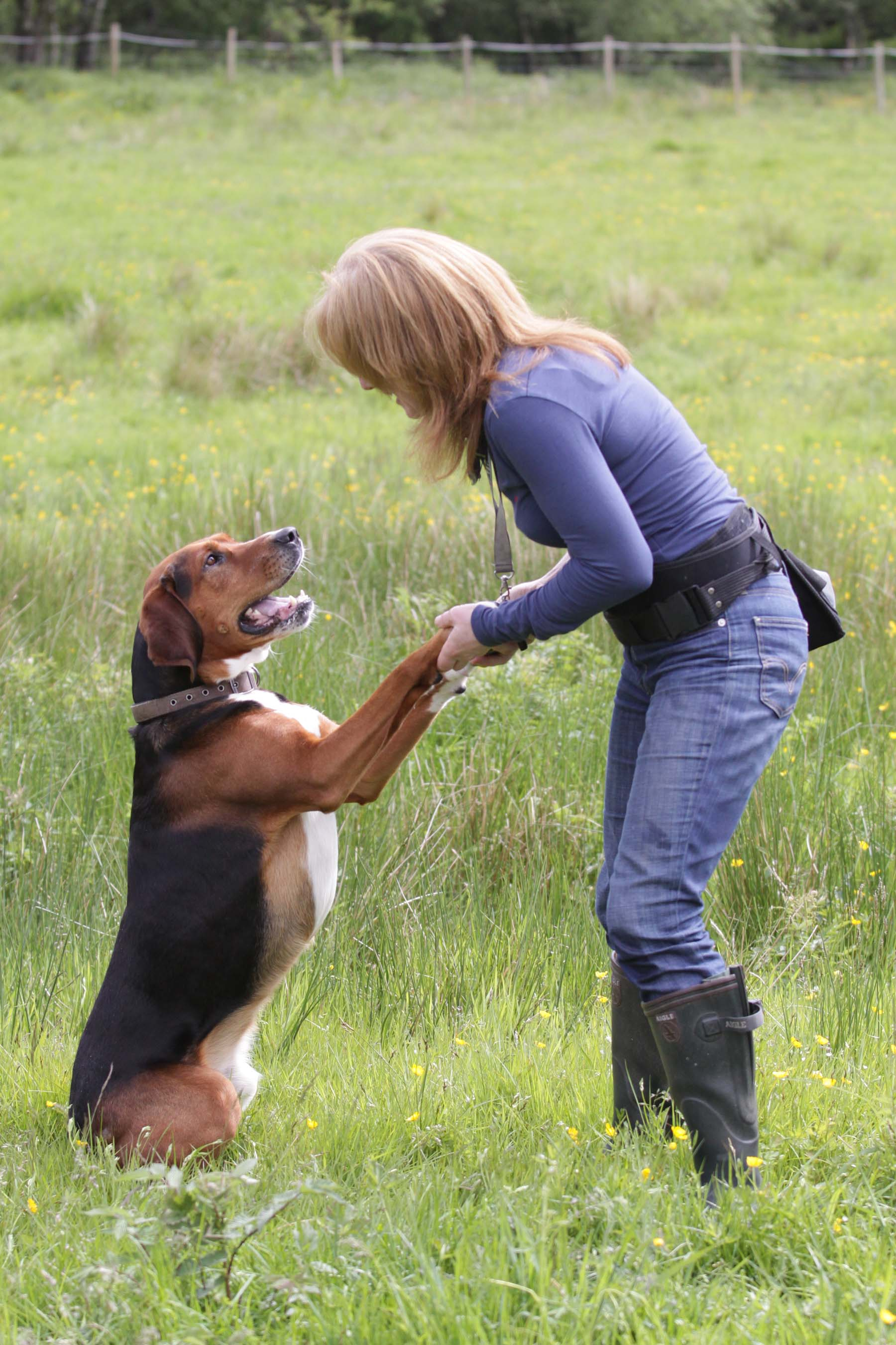 Jack - pet therapy for dog owners - hamiltonstovare